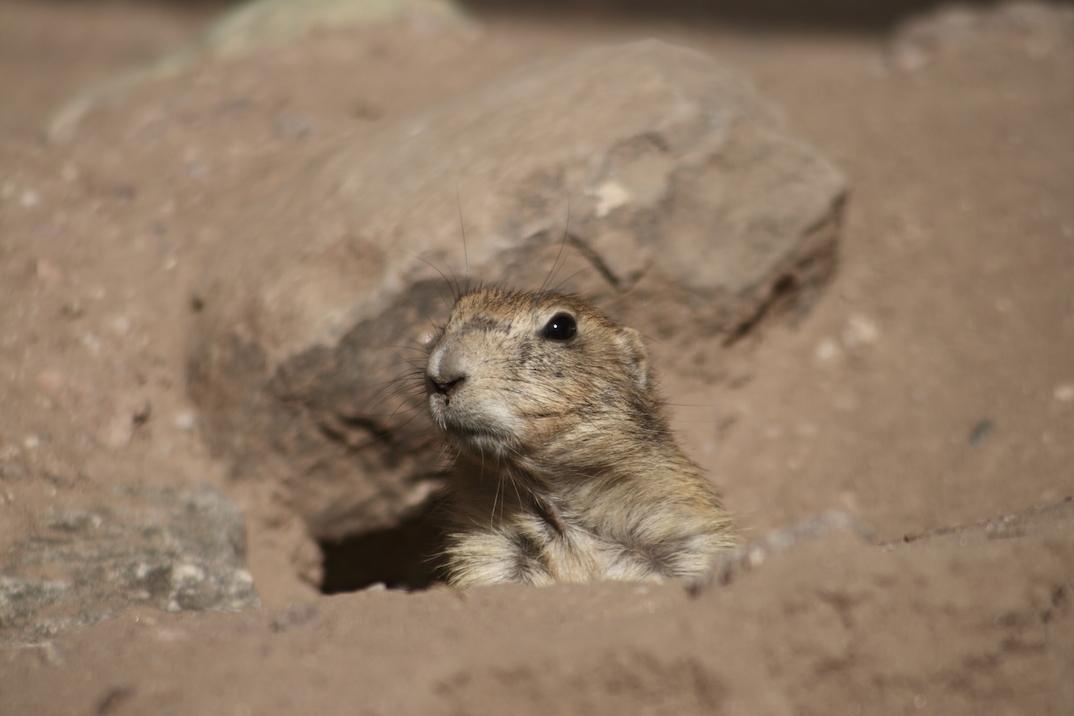 Humanitarian Groundhog Day